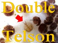 double telson
